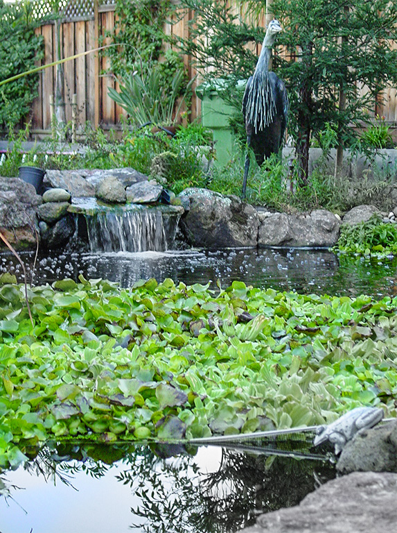 20 Pond Myths Exposed California Aqua Pros Blog