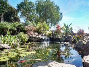 Aquascape Koi Pond - San Jose CA 3' depth