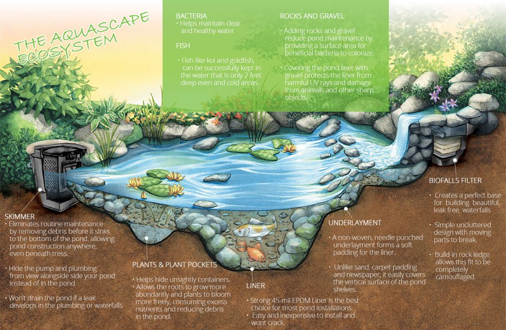How an aquascape ecosystem pond works in the bay area